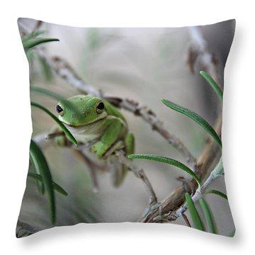Little Green Frog Throw Pillow by Lynn Jordan
