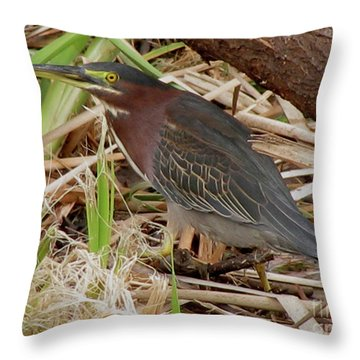 Throw Pillow featuring the photograph Little Green Heron by Donna Brown