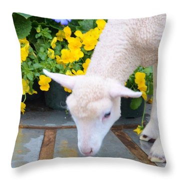 Little Lamb Throw Pillow by Kathleen Struckle