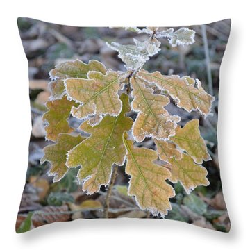 Throw Pillow featuring the photograph Little Oak by Felicia Tica