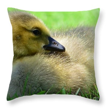 Little One Throw Pillow by Kathleen Struckle