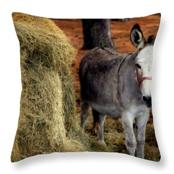 Little Pedro Throw Pillow by Karen Wiles