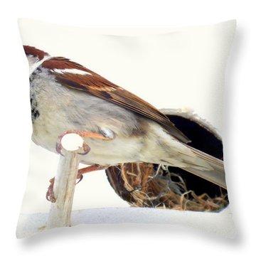 Little Sparrow Throw Pillow by Karen Wiles