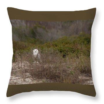 Throw Pillow featuring the photograph Little Talbot Snowbird by Paul Rebmann