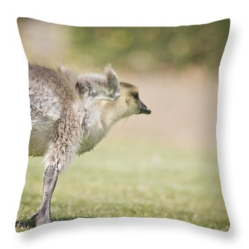 Throw Pillow featuring the photograph Little Wing by Priya Ghose