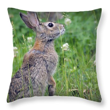 Live In Clover Throw Pillow by Brian Wallace