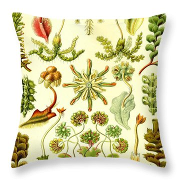 Liverworts Moss Brunnenlebermoos Haeckel Hepaticae Throw Pillow
