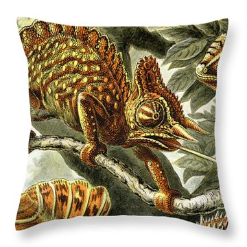 Lizard Detail I Throw Pillow by Unknown