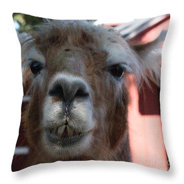 Llama After A Rough Night Throw Pillow by John Telfer