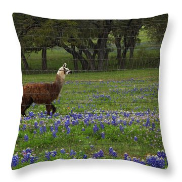 Llama In Bluebonnets Throw Pillow
