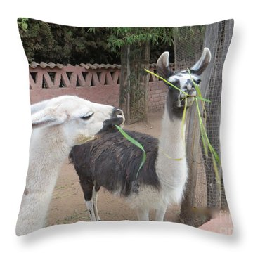 Llamas In Peru Throw Pillow