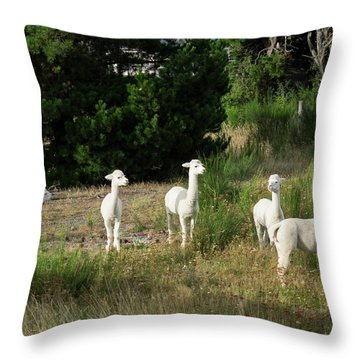Llamas Standing In A Forest Throw Pillow by Panoramic Images