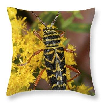 Locust Borer Beetle Throw Pillow