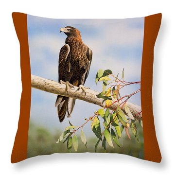 Lofty Visions - Wedge-tailed Eagle Throw Pillow by Frances McMahon