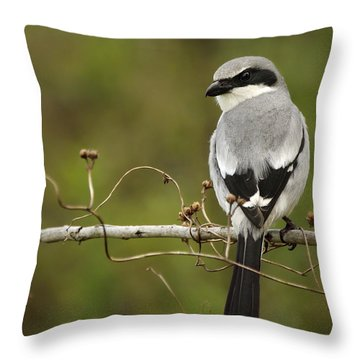 Loggerhead Shrike Throw Pillow