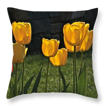 Lollipop Tulips And Grass And Stone Wall Throw Pillow by Byron Varvarigos