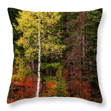 Lone Aspen In Fall Throw Pillow by Chad Dutson