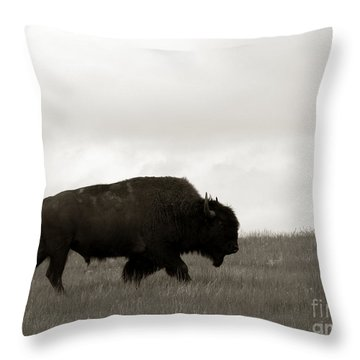 Lone Bison Throw Pillow by Olivier Le Queinec