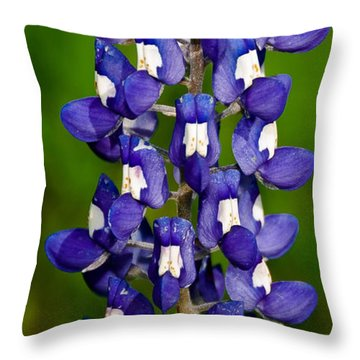Lone Bluebonnet Throw Pillow