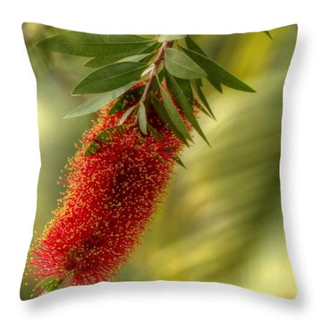 Lone Bottlebrush Throw Pillow