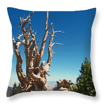 Throw Pillow featuring the photograph Lone Bristlecone by Alan Socolik