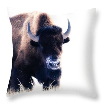 Lone Bull Throw Pillow