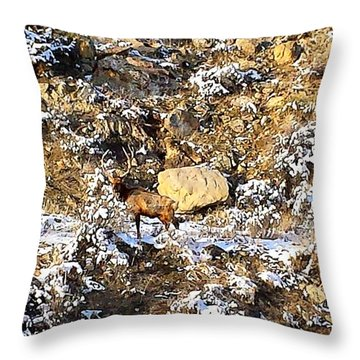 Lone Bull Elk Throw Pillow