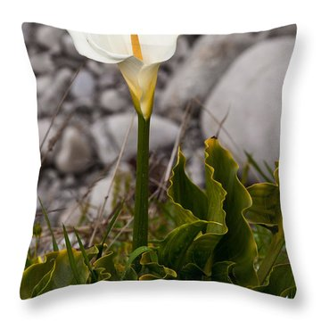 Lone Calla Lily Throw Pillow by Melinda Ledsome