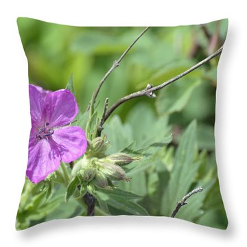 Lone Geranium In Yellowstone Throw Pillow by Bruce Gourley