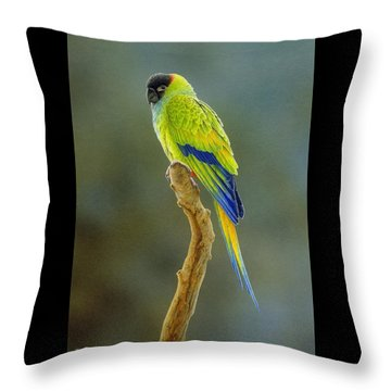Lone Star - Nanday Conure Throw Pillow by Frances McMahon