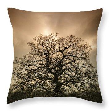 Lone Tree Throw Pillow by Amanda Elwell