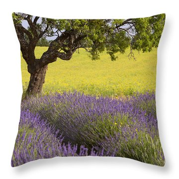 Lone Tree In Provence Throw Pillow by Brian Jannsen