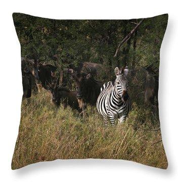 Lone Zebra Throw Pillow by Joseph G Holland