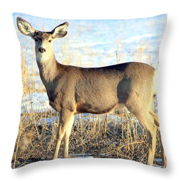Throw Pillow featuring the photograph Lonesome Doe Sunset by Barbara Chichester