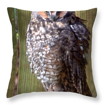Throw Pillow featuring the photograph Long Eared Owl by Joseph Skompski