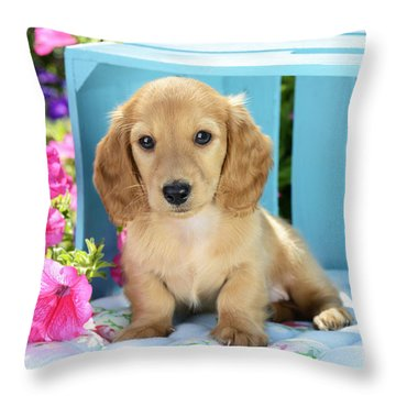 Long Eared Puppy In Front Of Blue Box Throw Pillow by Greg Cuddiford
