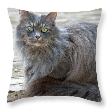 Long Haired Gray Cat Art Prints Throw Pillow