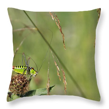 Throw Pillow featuring the photograph Long-horned Katydid by Jivko Nakev