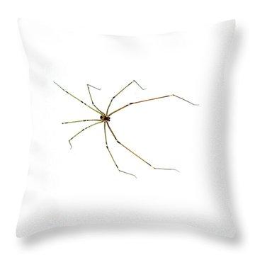 Long-legged Spider Throw Pillow