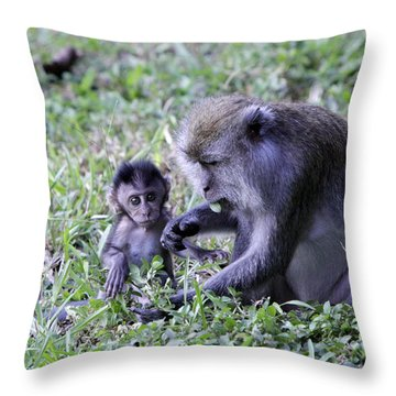 Throw Pillow featuring the photograph Long Tailed Macaque Family by Shoal Hollingsworth