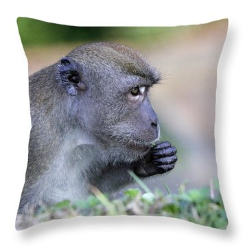 Throw Pillow featuring the photograph Long Tailed Macaque Feeding by Shoal Hollingsworth