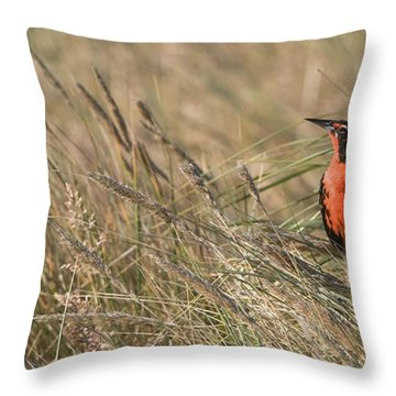 Long-tailed Meadowlark Throw Pillow by John Shaw