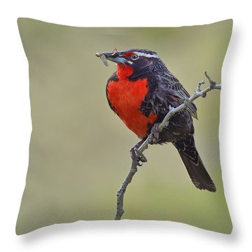 Long-tailed Meadowlark Throw Pillow by Tony Beck