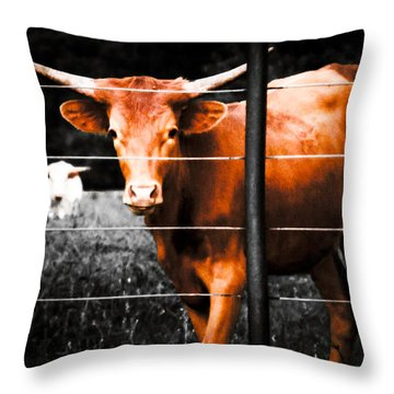 Longhorn Curiosity Throw Pillow