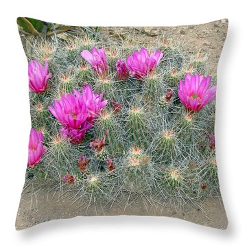 Throw Pillow featuring the photograph Look But Don't Touch by Linda Cox