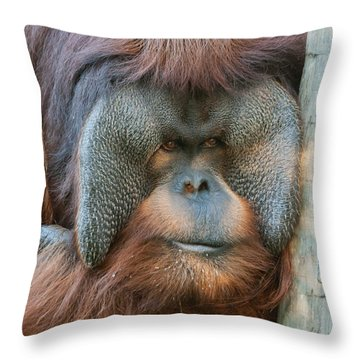 Look Into My Eyes Throw Pillow by Tim Stanley