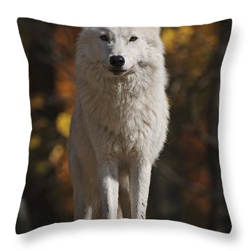 Throw Pillow featuring the photograph Look Out by Wolves Only