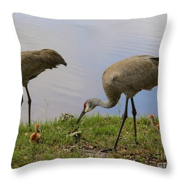 Looking Around Throw Pillow by Zina Stromberg
