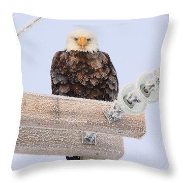 Looking At You Throw Pillow