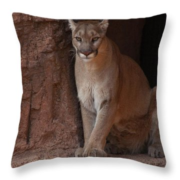 Throw Pillow featuring the photograph Looking For A Meal by Daniel Hebard